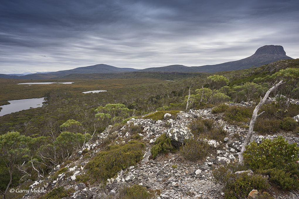 Small_Copyright_View of Pine Forest Moor 1.jpg