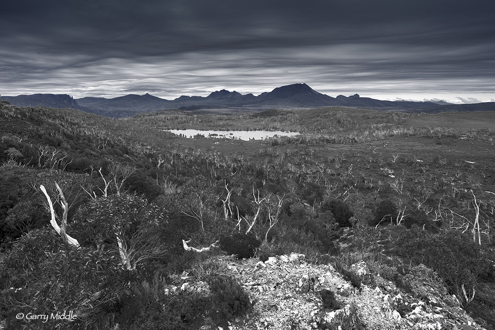 Small_Copyright_View of Pine Forest Moor 2 B&W.jpg