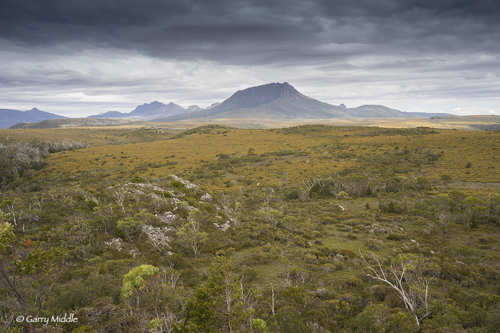 View of Pine Forest Moor 5.jpg