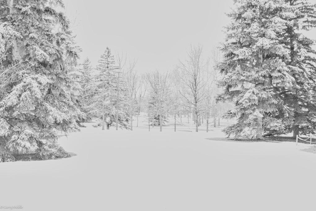 Small_copyright__B&W_Full_collection_Portfolio_Calgary_snow_trees.jpg