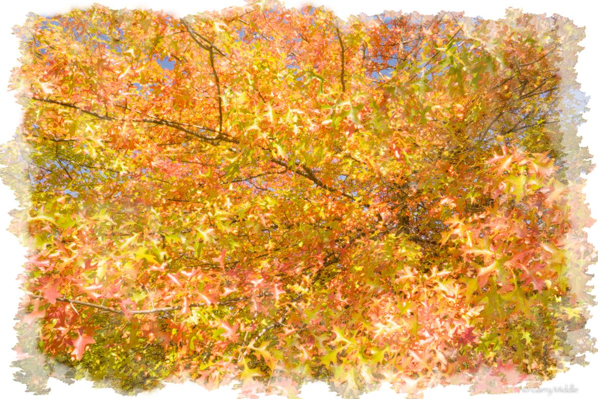 Small_Copyright_Autumn leaves.jpg