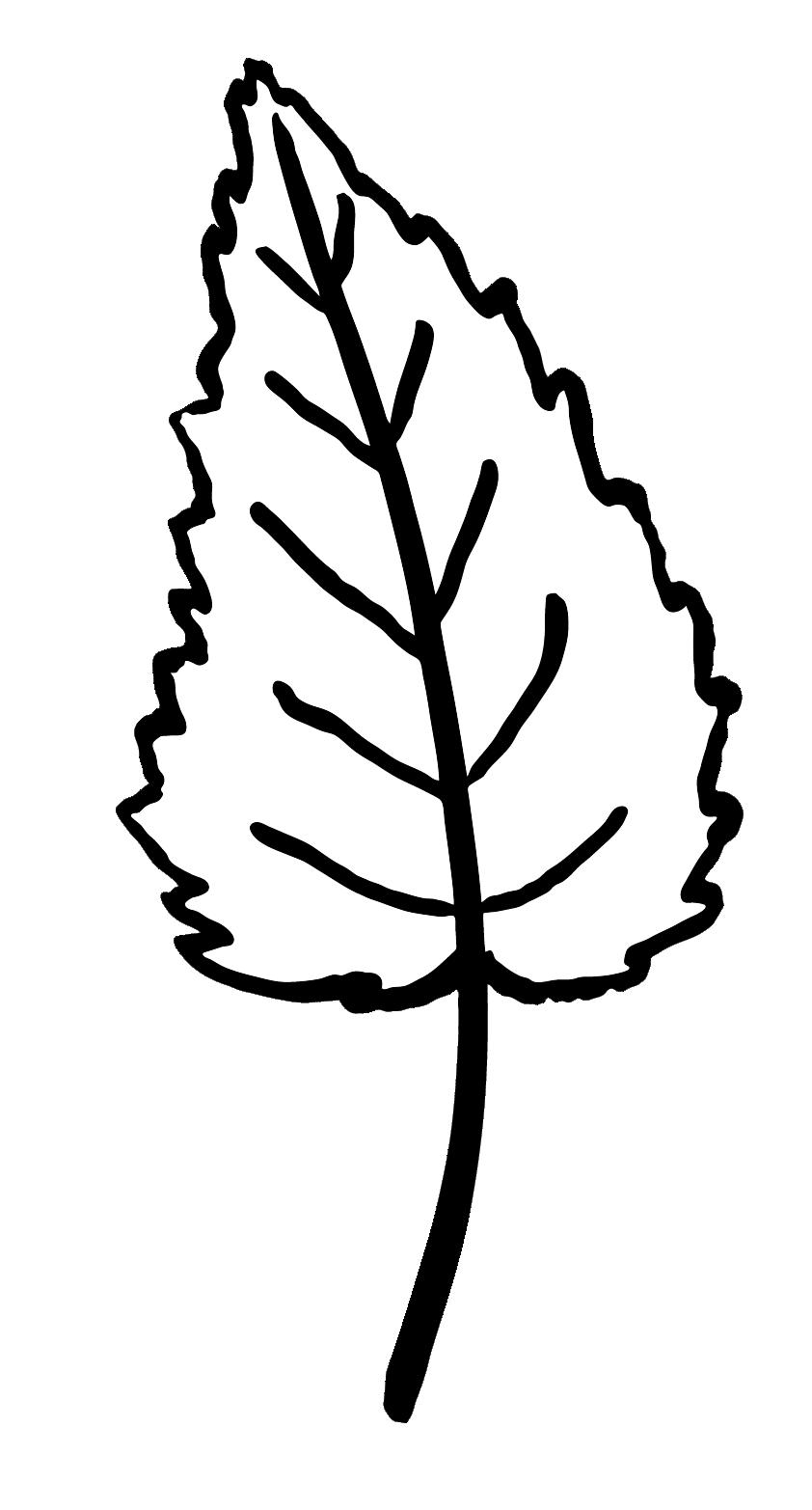 leaf detail - uneven heart shape, serrated edges