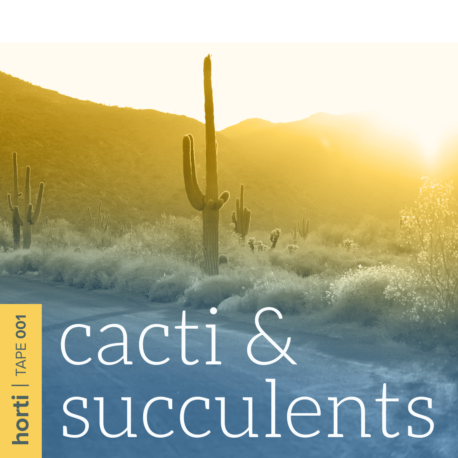 A botanical playlist & kundalini meditation journey - Inspired by sensual succulents and resilient cacti, curated by DJ Kyma for horti.