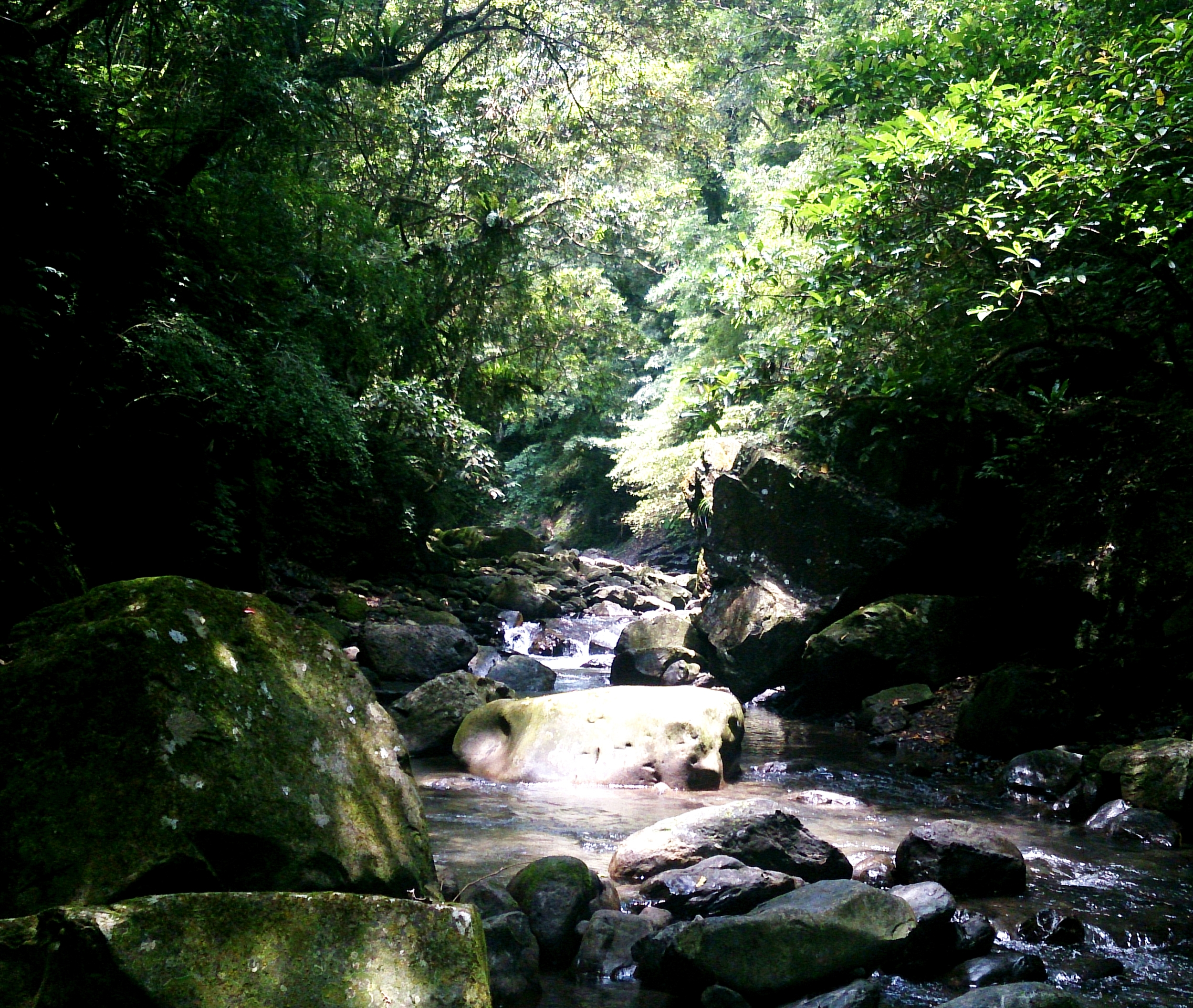 2015: Typical river stretch. The forest is thick and it feels very remote.