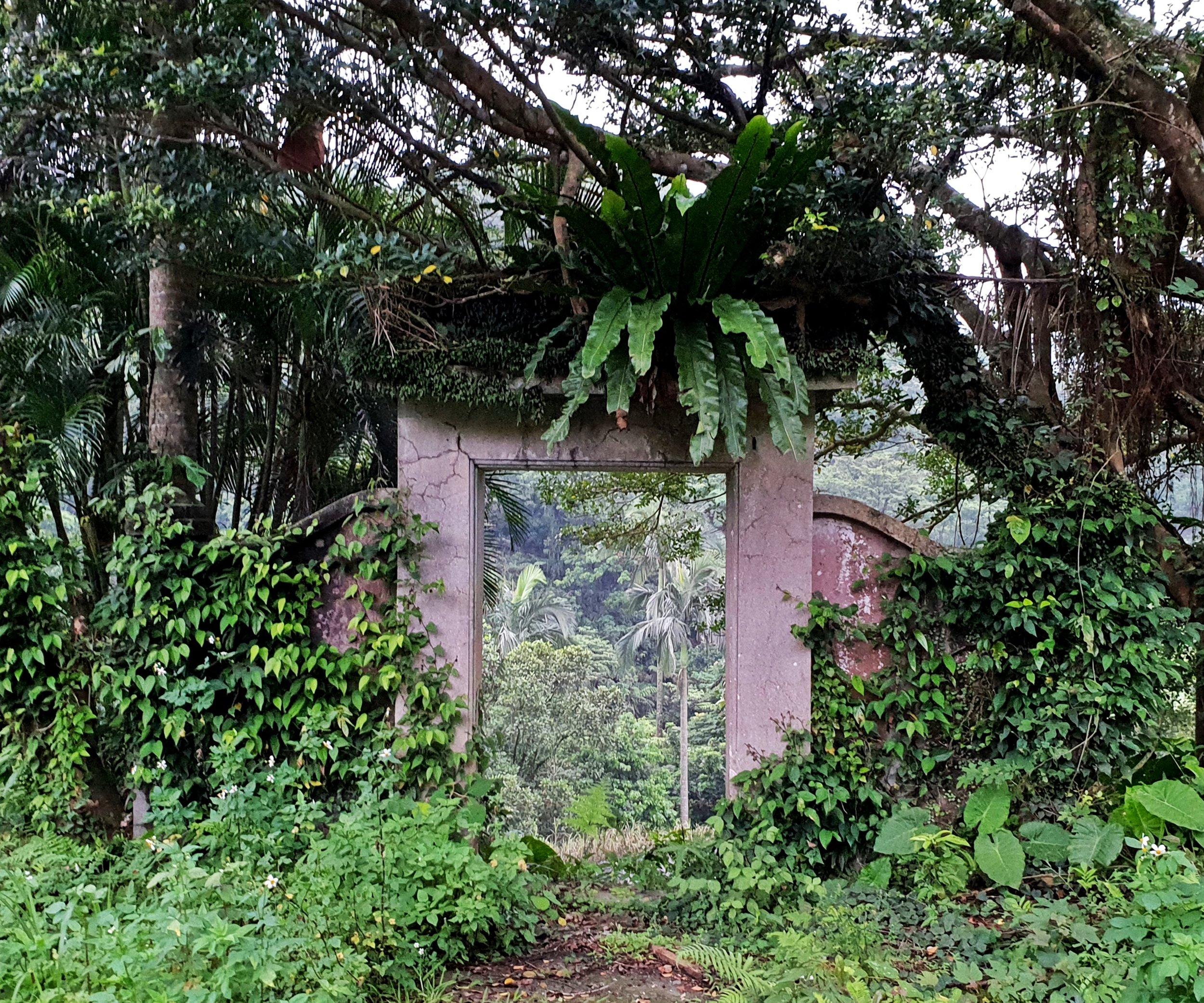 Entrance gate adorned with birds nest ferns
