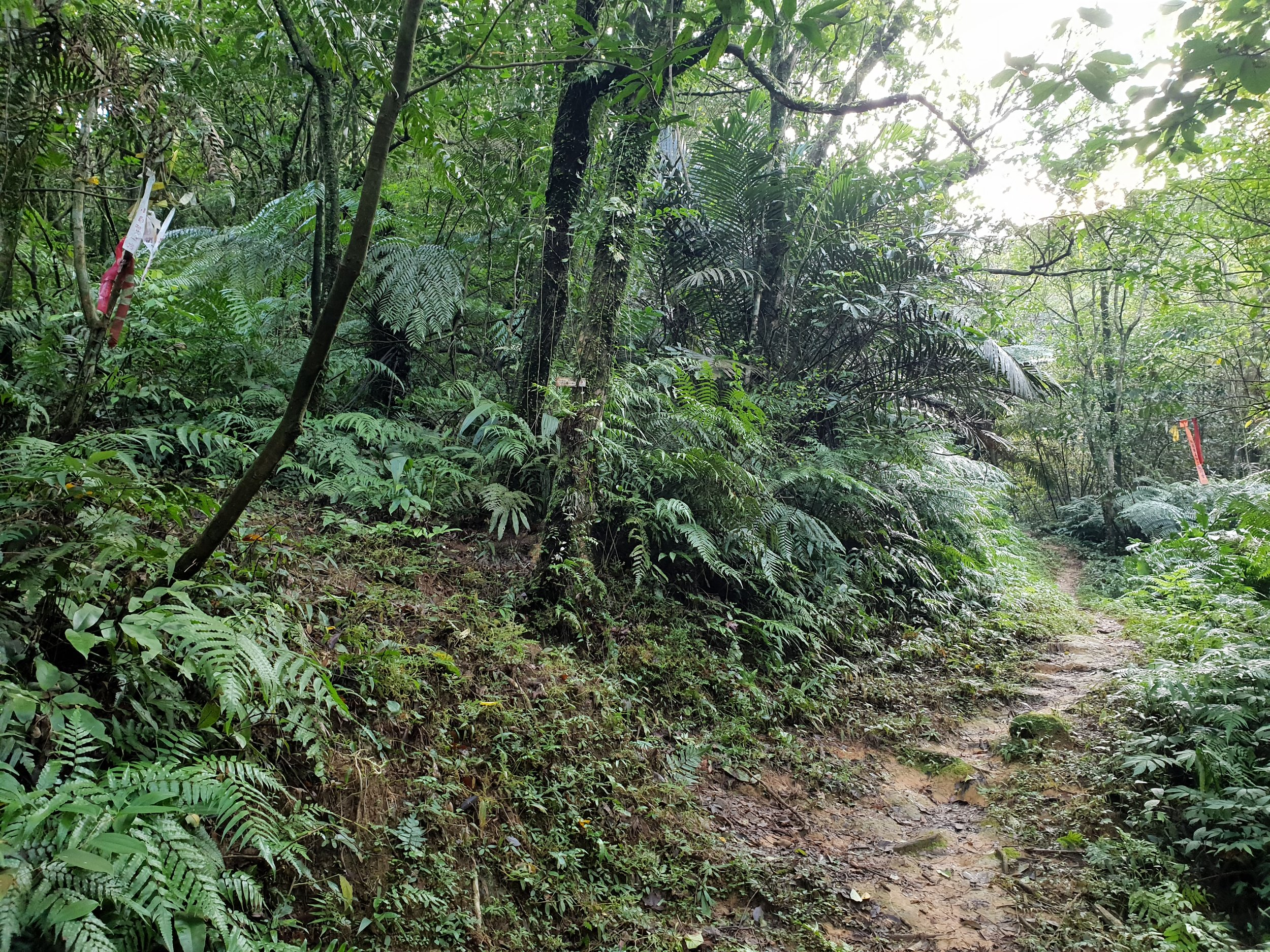 If you're coming from Sandiaoling the left path heads up Mt Youkeng. The flat path goes to the bamboo clearing.