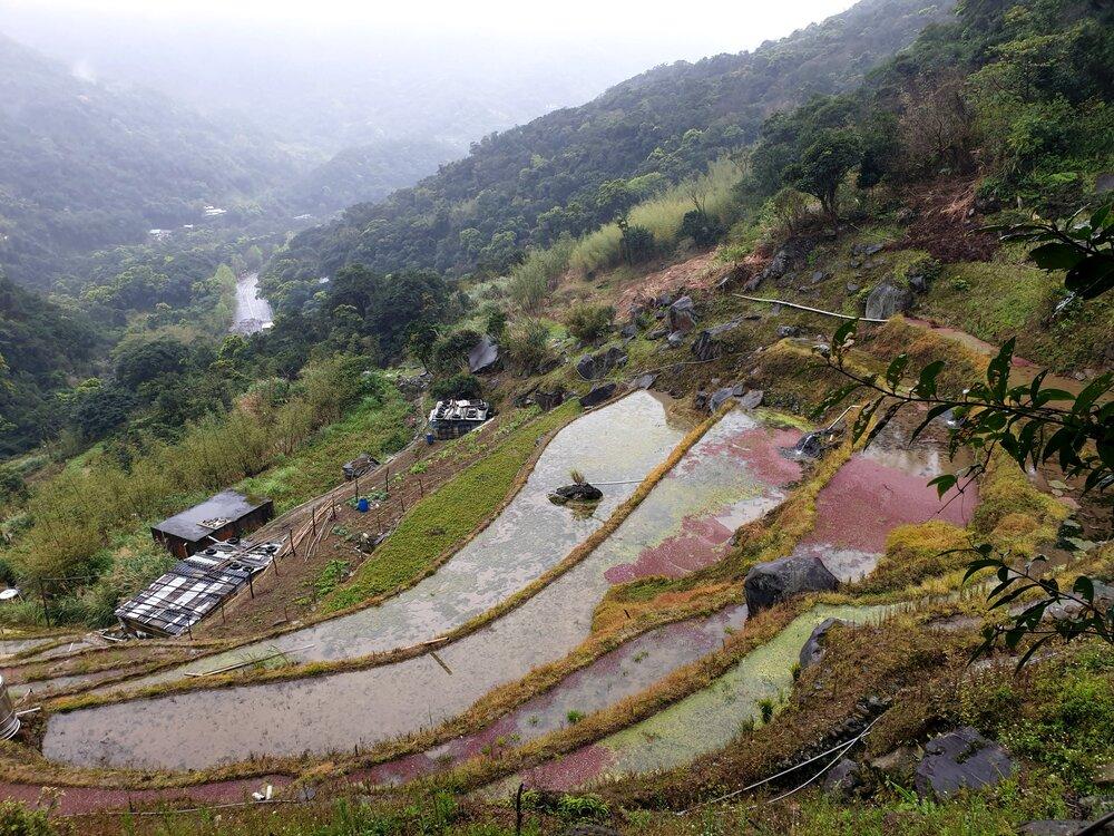 Pingding Old Trail and Daqitou Trail, Yangmingshan (平頂古圳步道)