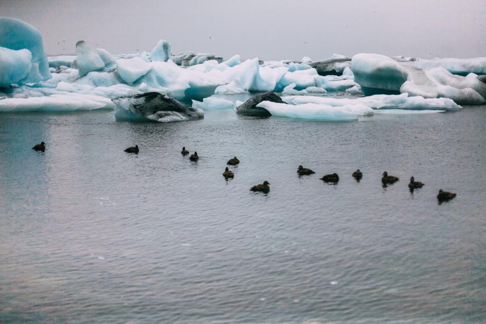 Iceland-Vestmannaeyjar-Reydarfjodur-7.7-11.14-160.jpg