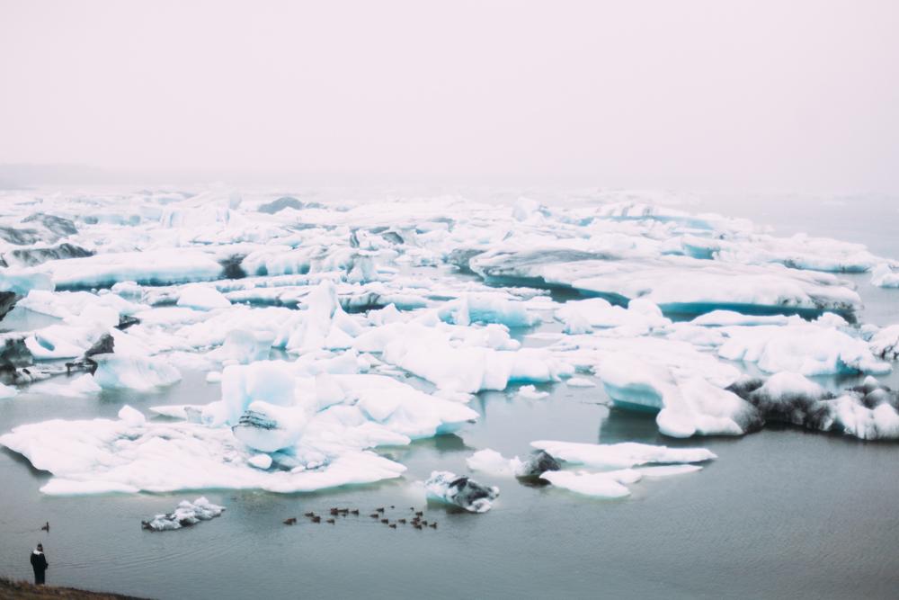 Iceland-Vestmannaeyjar-Reydarfjodur-7.7-11.14-174.jpg