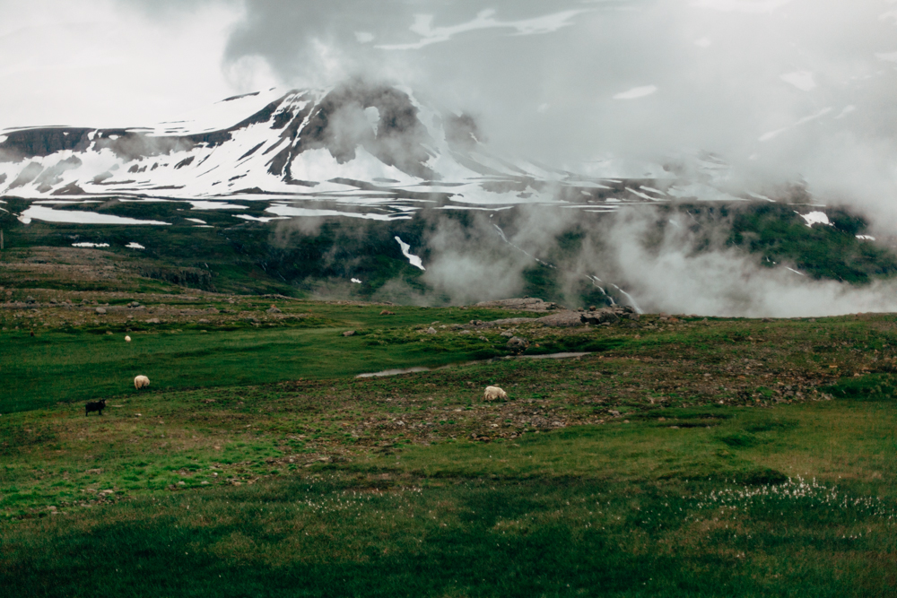 Iceland-Seydisfjordour-7.13-15.14-049.jpg