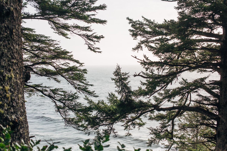 light and canon beach-falcon trail 2.2.15-178.jpg