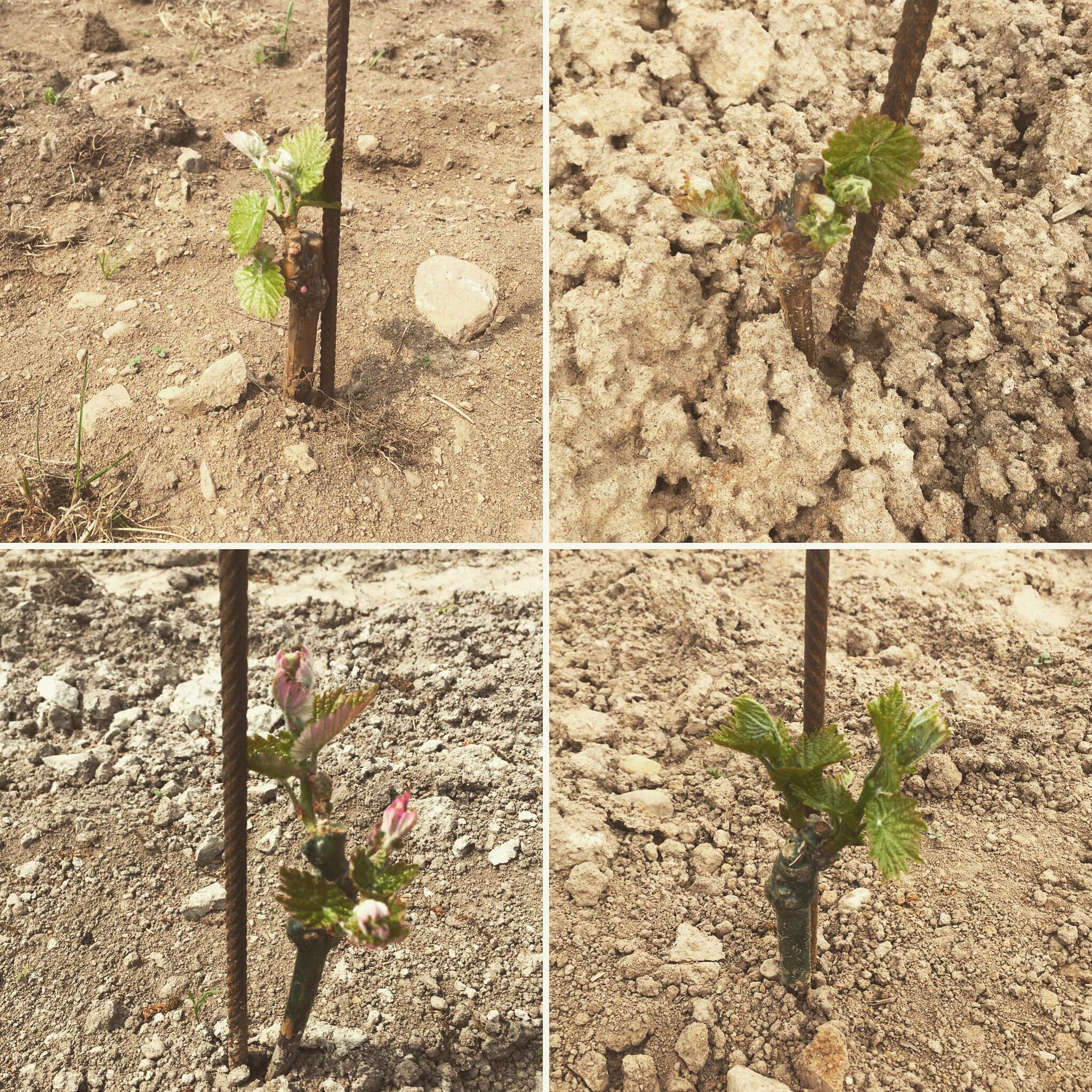 Nyplanteringen skjuter