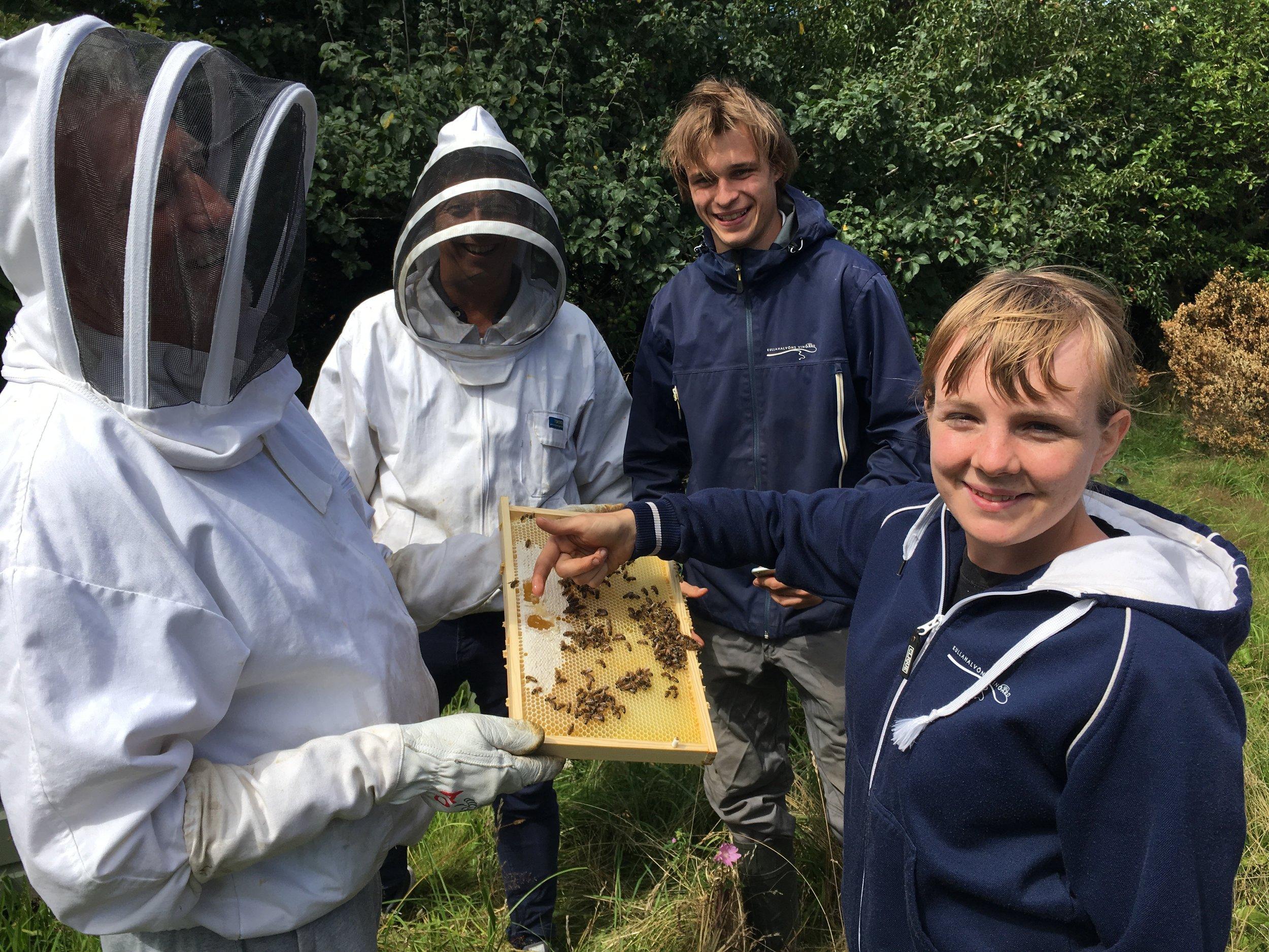 Martina testar honungskvalité