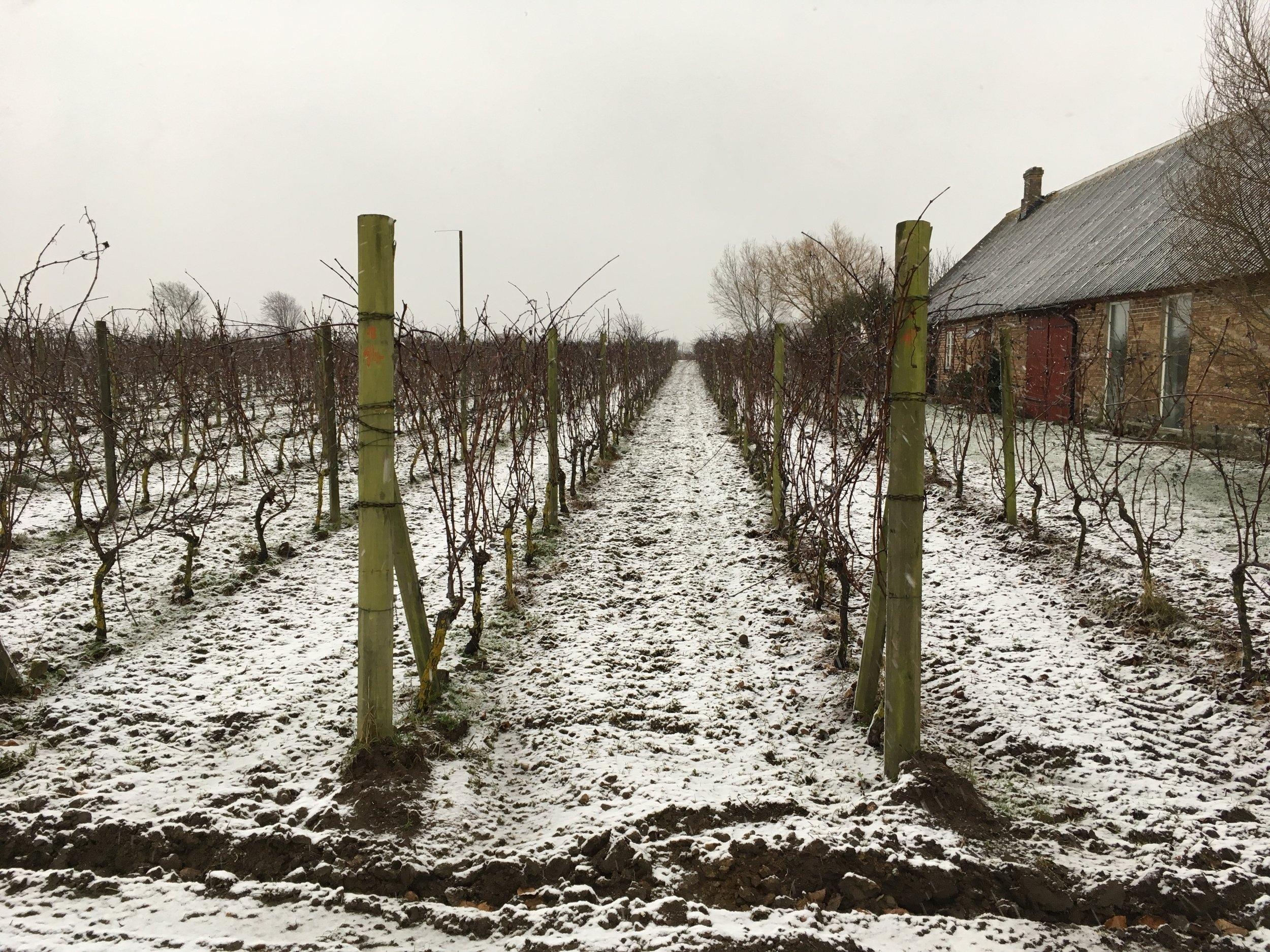 Snö och dags för vinterbeskärning