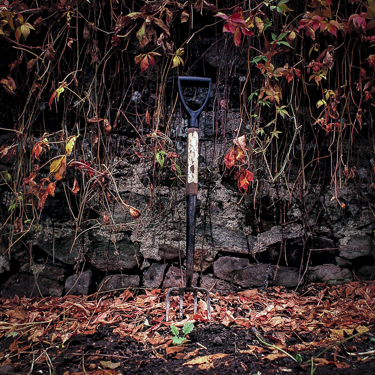 the garden fork by ali cleary