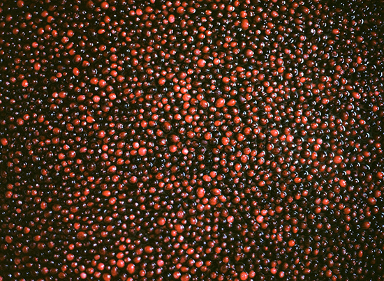 Cranberries Photo by Parker Fitzgerald.jpg