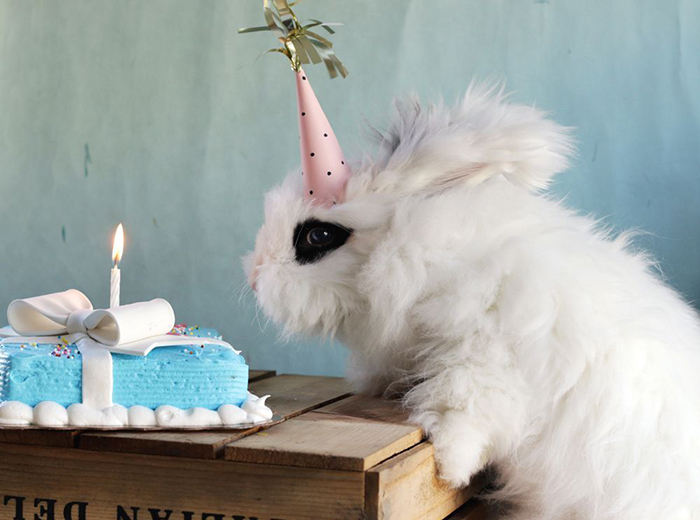 Cleo's 1st Birthday