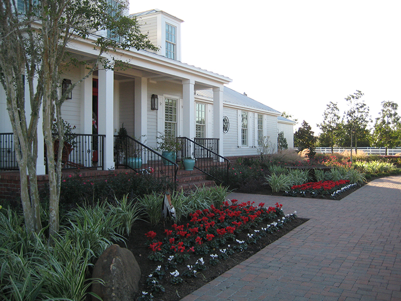 ab-cyclamen-Winter-Color-Christmas-flowers-landsacpe-design-maintenance-red-white-best-envy-exteriors-the-woodlands-spring-cypress-houston.jpg