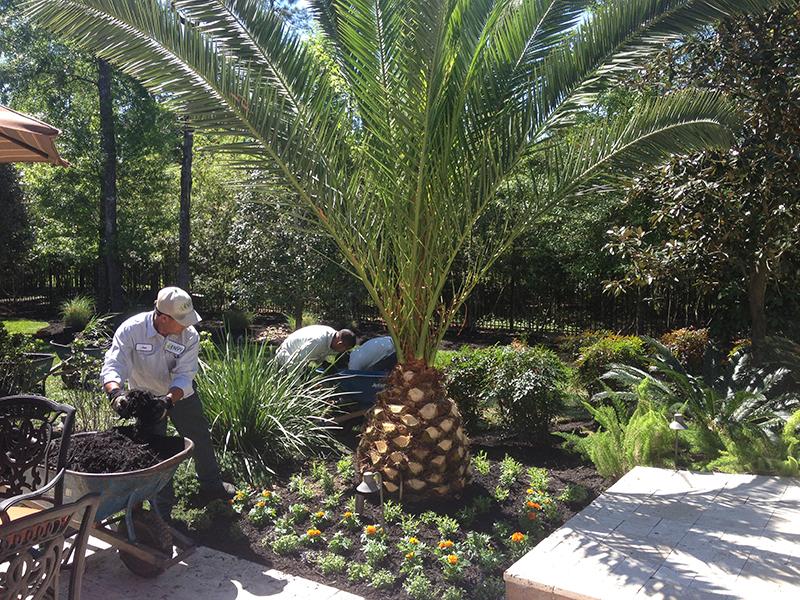 crews-installation-landscape-the-woodlands-houston-spring-cypress-landascaper-landscaping-palm-design-build-aggie-custom-luxury-best-irrigation-sprinkler-system-drainage-repair.jpg
