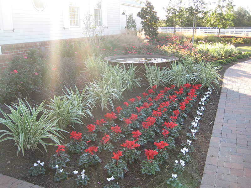 cyclamen-red-christmas-color-install-clean-up-landscape-fertilization-maintenance-the-woodlands-cypress-magnolia-spring.jpg