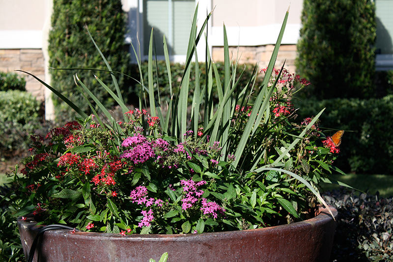landscape-design-custom-pottery-urns-iris-lawn-maintenance-service-the-woodlands-best-landscaper-landscaping-free-consulation-aggie-envy-exteriors-build-install-repair-sprinklers-pool-spring-montgomery-houston.jpg