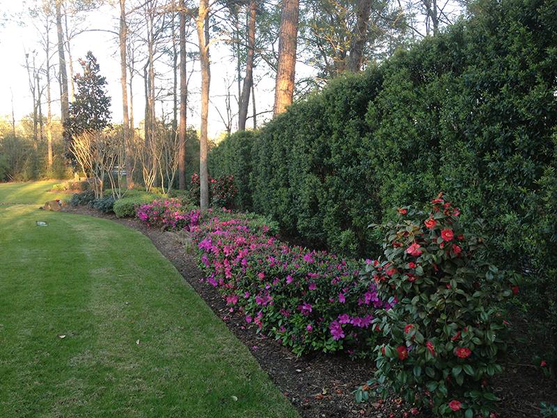 landscape-design-houston-privacy-wall-hedge-landscaper-plants-trees-lawn-care-tree-trimming-maintenance-the-woodlands-spring-conroe-memorial-service-best-landscape-design-build.jpg
