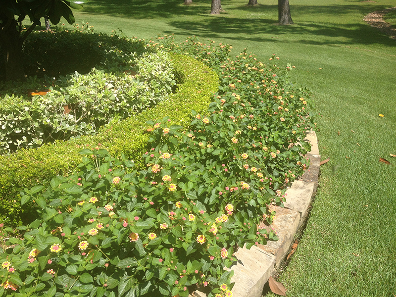 landscape-design-the-woodlands,-tx-spring-houston-stone-border-stacked-lantana-lawn-maintenance-lawn-care-lawn-service-aggie-beautiful-repair-landscaper-landscaping-montgomery-magnolia-cypress-drainage.jpg
