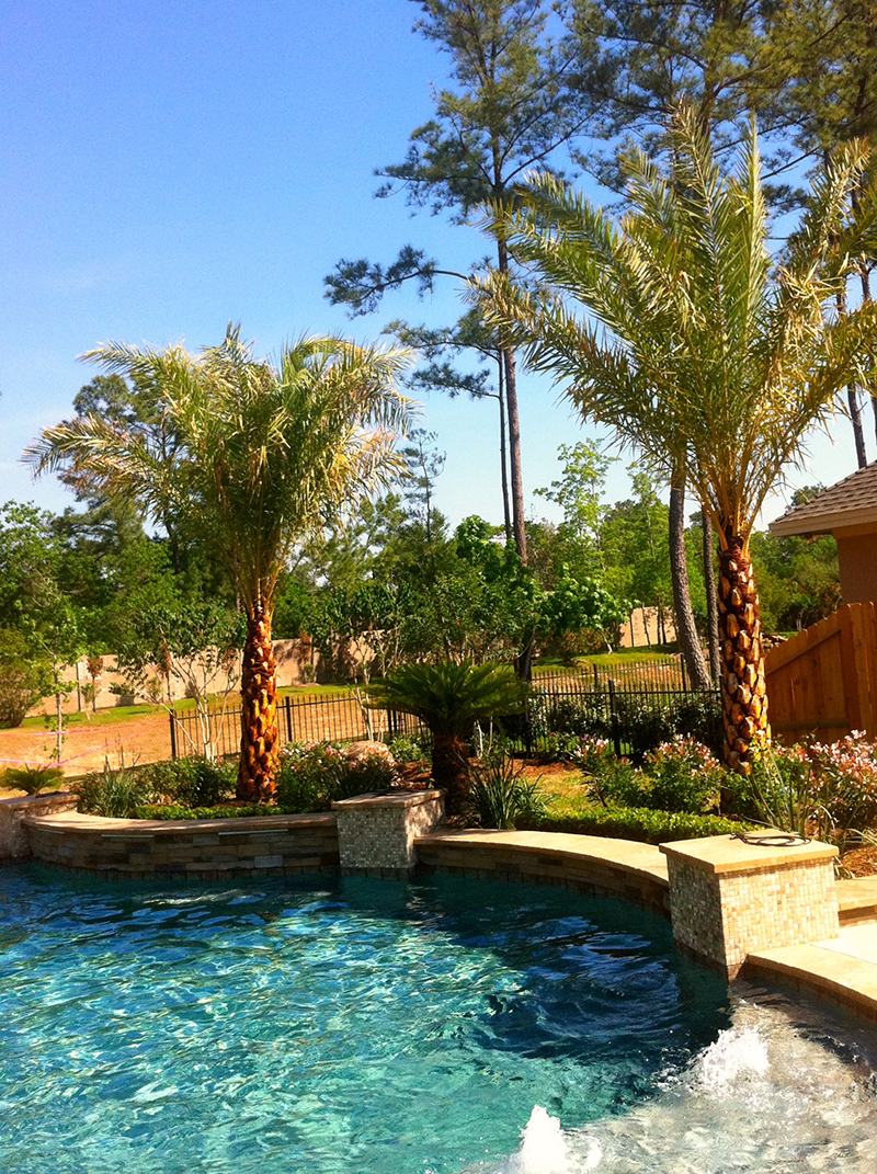 pool-landsacpe-palms-the-woodlands-design-spring-cypress-conroe-landscaping-best.jpg