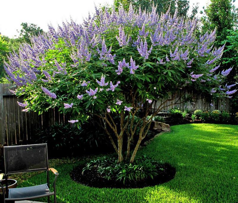 Vitex-tree-landscape-install-landscaper0installation-sprinkler-repair-sprinkler-system-landscape-lighting-design-buil-builder-nursery-the-woodlands-spring-maintenance-houston-montgomery-cypress-magnolia.jpg