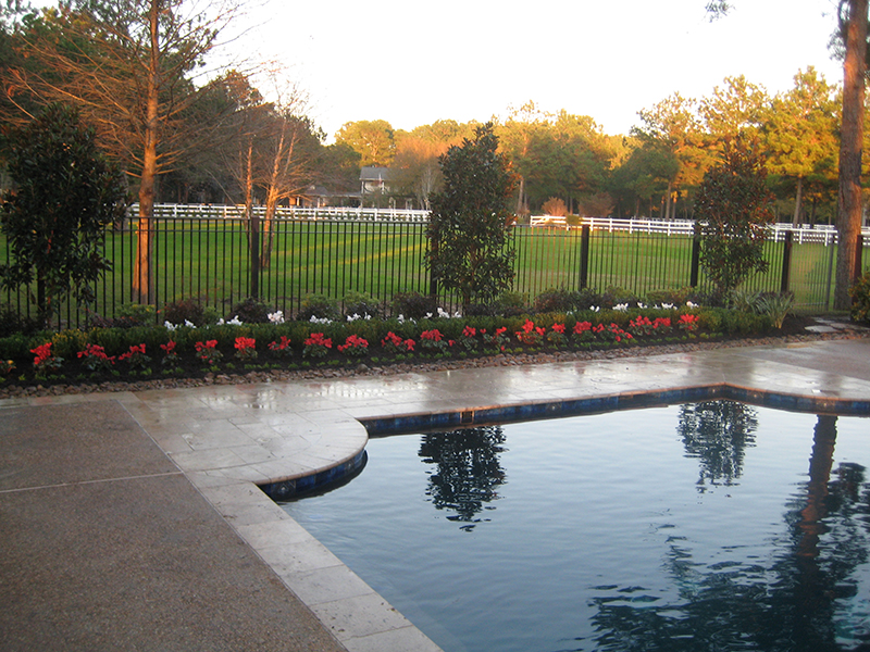 Winter-Color-pool-landscape-Christmas-red-white-flowers-the-woodlands-maintenance-landscape-cyclamen-envy-exteriors-spring-magnolia.jpg