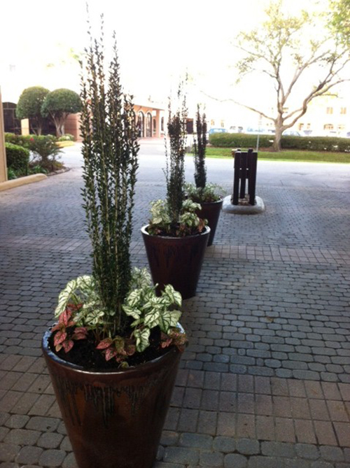 urns-installed-sky-pencil-pottery-glazed-rustic-formal-pots-planters-custom-design-installation-landscape-landscaper-best-top-landscaping-ideas-the-woodlands-houston-spring-magnolia-conroe-montgomery-cypress.jpg
