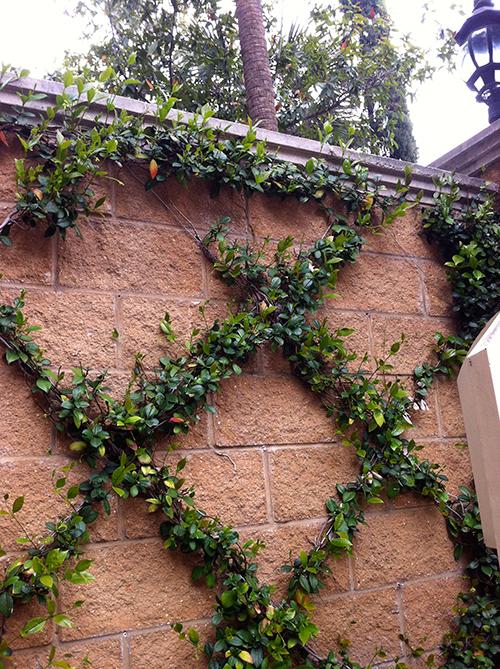 climbing-vines-diamond-trellis-entry-jasmine-the-woodlands-fence-stone-envy-spring.jpg