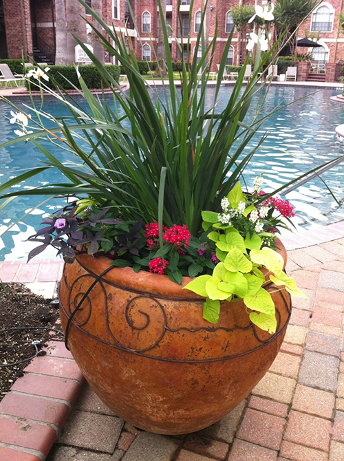 pottery---iris-seasonal-color-urn-planter-by-pool-the-woodlands-spring-houston-tx.jpg