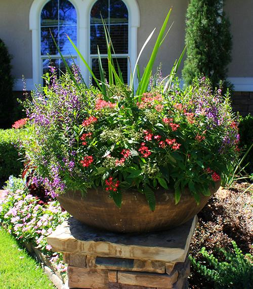 pottery-urn-landscape-envy-planting-low-bowl-magnolia-the-woodlands-houston.jpg