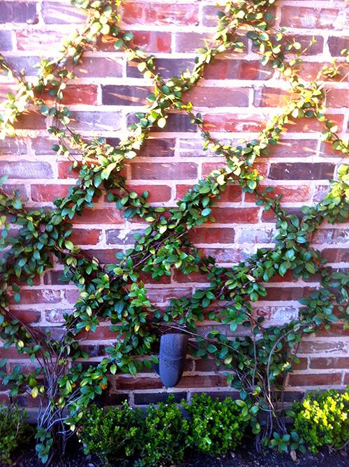 Trellis-diamond-planting-jasmine-brick-wall-the-woodlands-houston-landsacpe-design.jpg