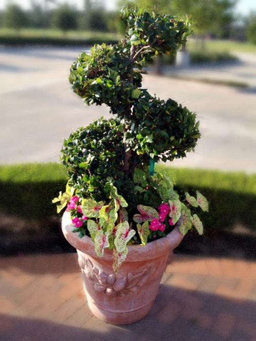 urn-planter-spiral-juniper-planting-houston-tomball-the-woodlands-landscape-envy-exteriors.jpg