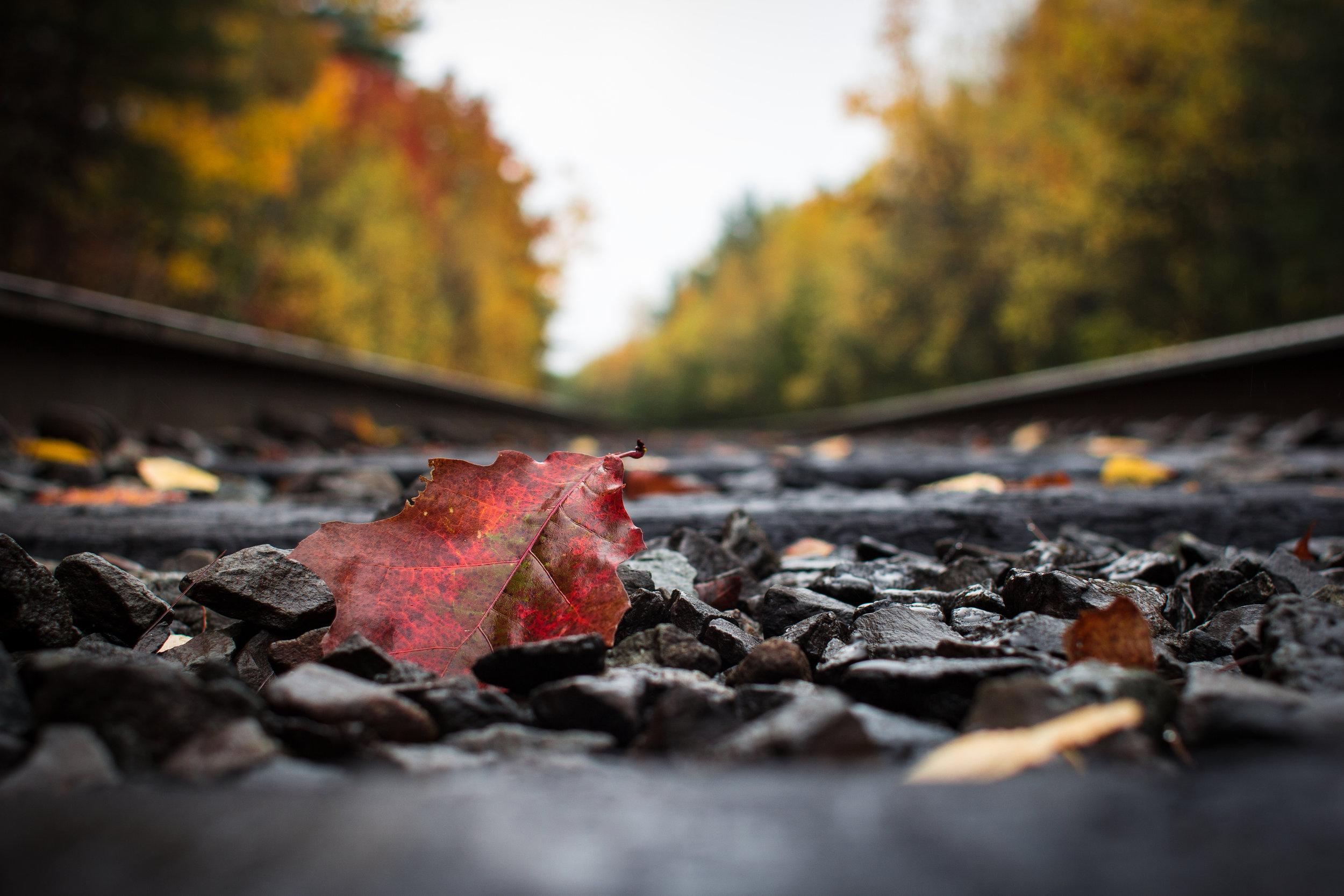 Autumn Leaf on Train Track