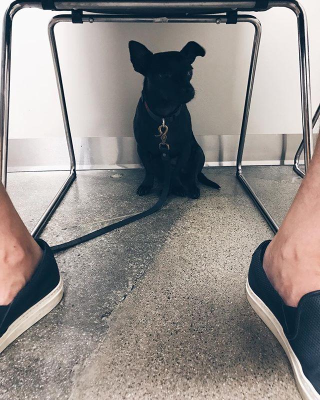 Patio isn't a fan of the vet