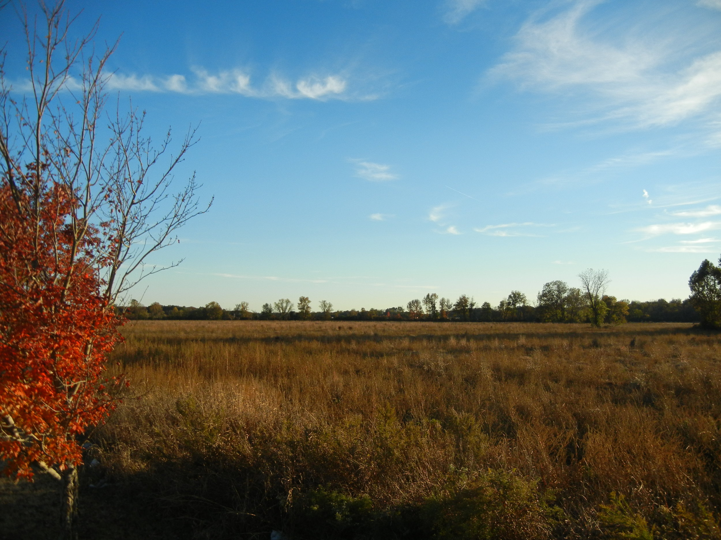 West Tract Cropland.JPG