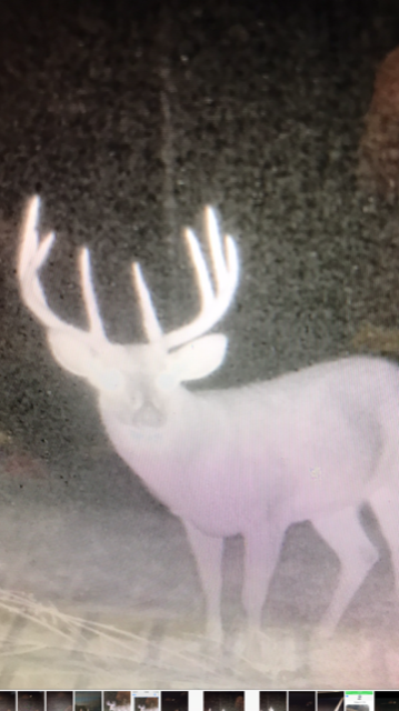 Pic - Big Buck.PNG