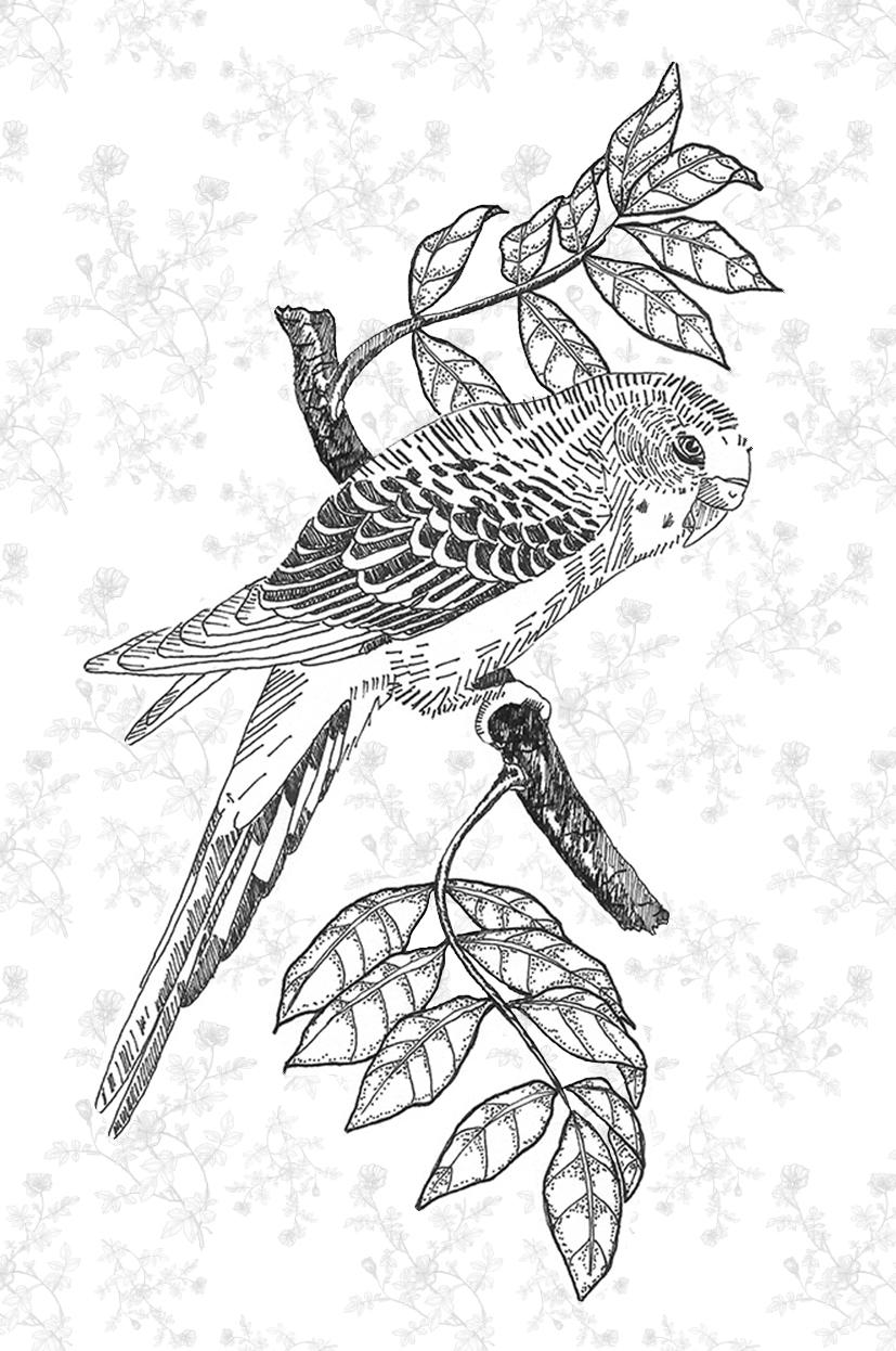 parakeet on a tree com fundo site.jpg