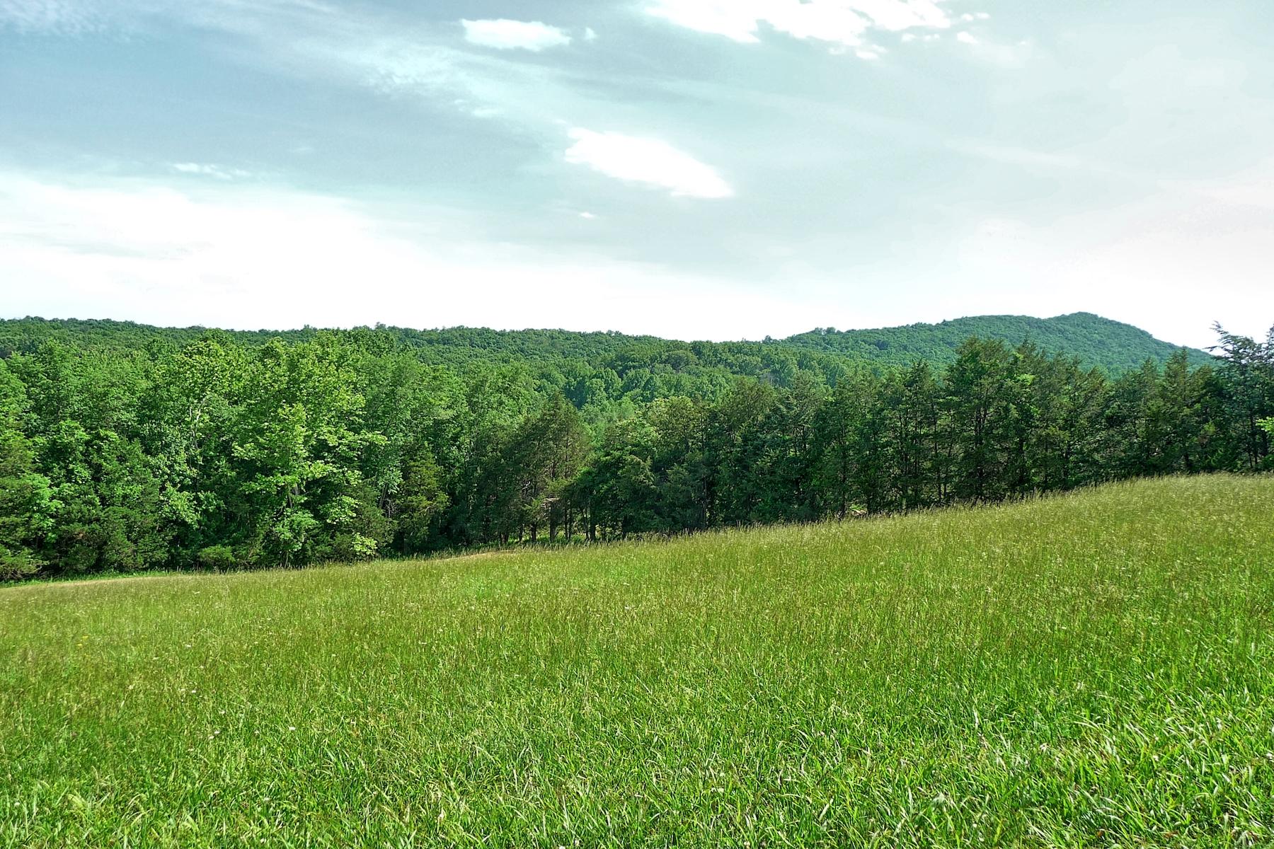 Castle Mtn. Field .jpg