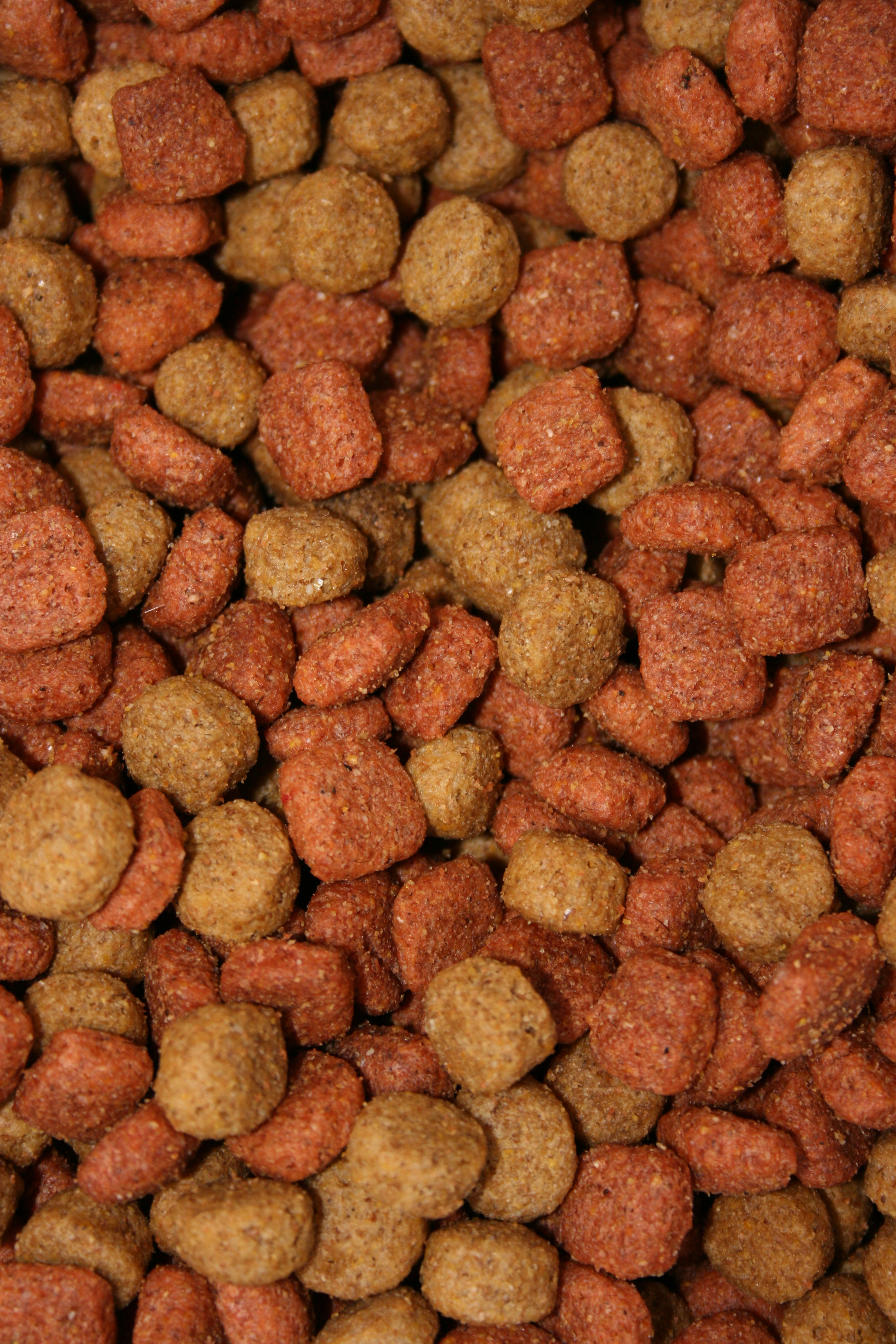 Dog Food Party *do not rotate image*.jpg