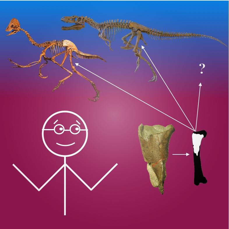 Be a Compensation Paleontologist -