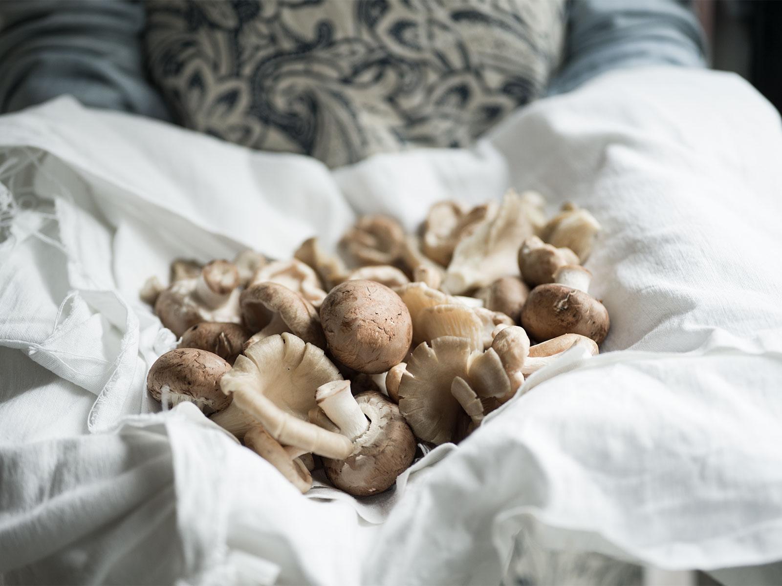 Mushroom Medley | Mixed Mushroom Pithivier