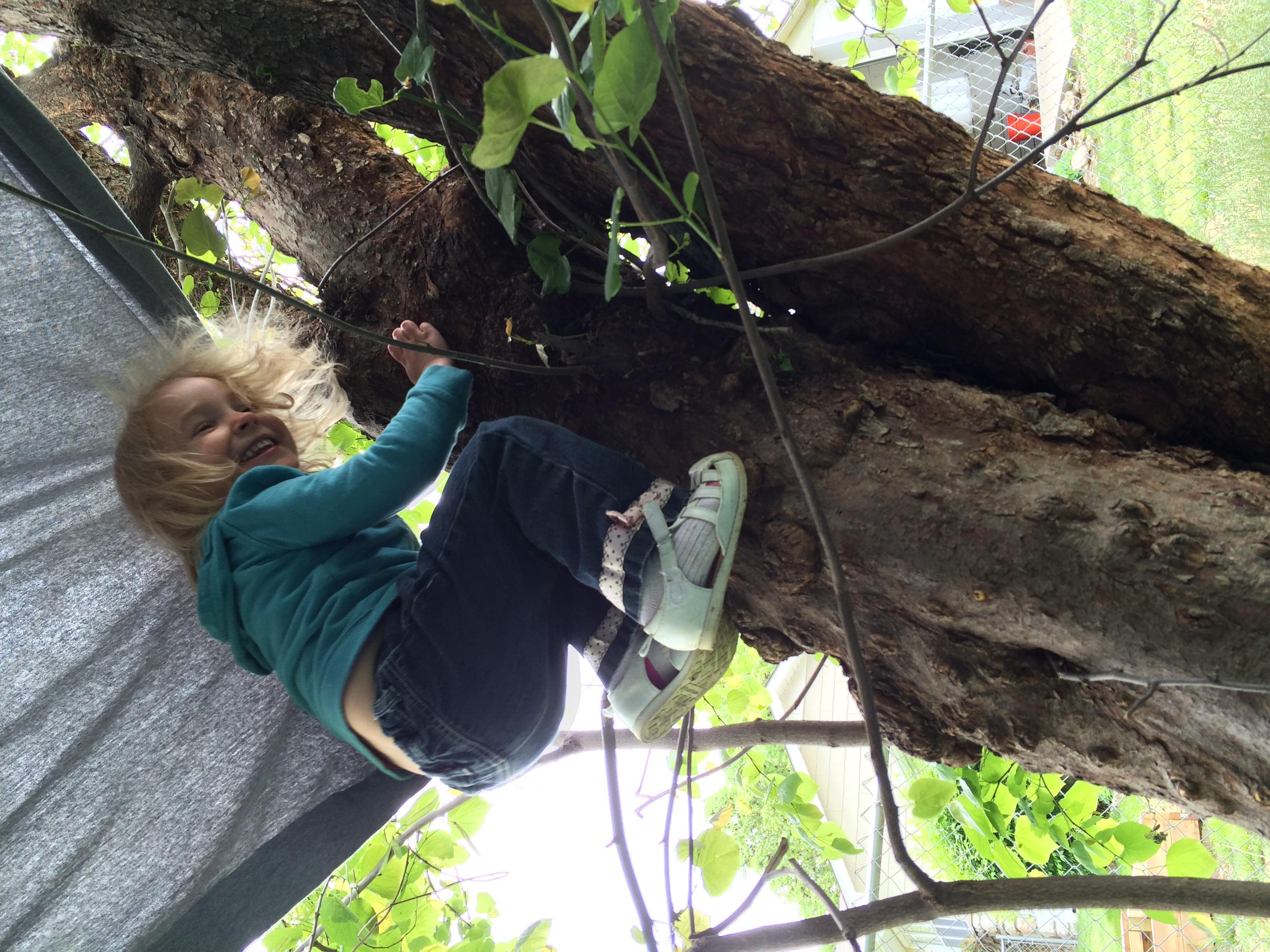 Sydney the climber!