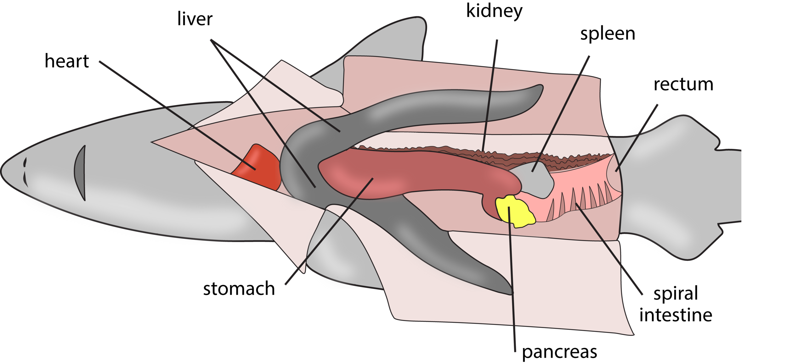 Figure 6.14.png