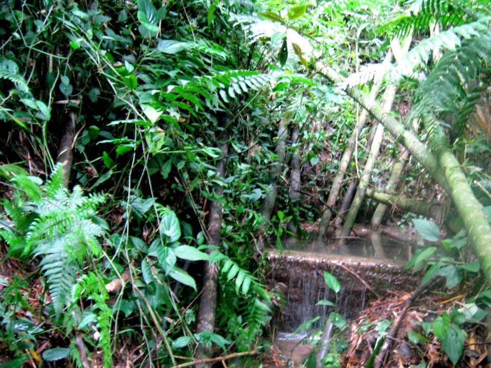 water spring.jpg