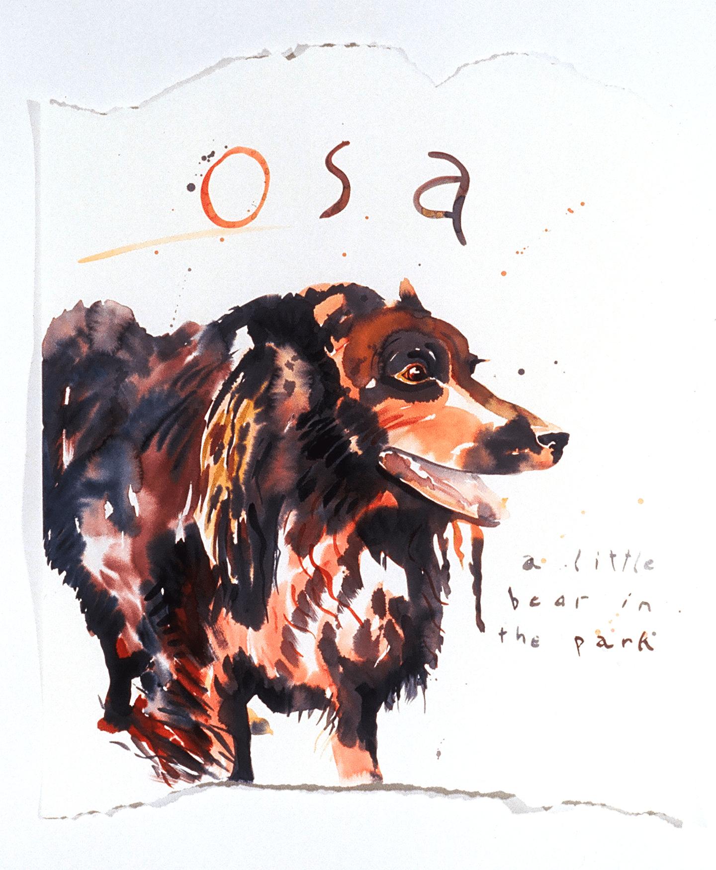 Osa, the little bear from the park in Santa Fe.