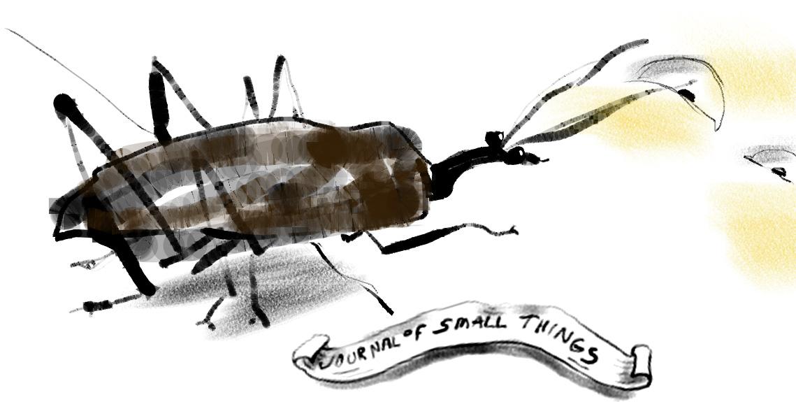 2. I'm a Westen Conifer Seed Bug.